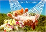 life_beautiful