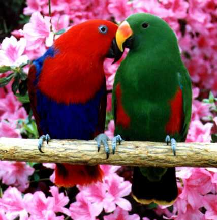 Topic pentru Orice Discutii - Pagina 5 Papagali1